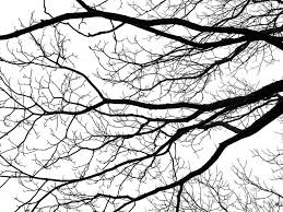Amazon.com: Laminated 32x24 inches Poster: Tree Branches Silhouette Black  White Fractal Pattern Bare Winter Defoliated Contrast Abstract Division  Roots: Posters & Prints