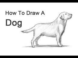 lab dog drawing easy. Interesting Dog How To Draw A Dog Labrador Retriever Intended Lab Drawing Easy A
