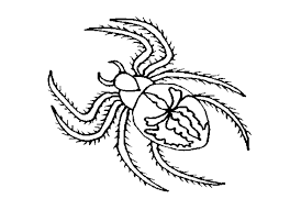 Small Picture Spider coloring pages to print ColoringStar