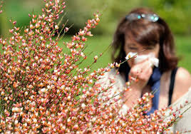 Allergy treatment: Scientists claim breakthrough that could lead to ...