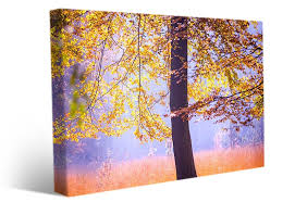 landscape wall art photo of beautiful tree in fall colors