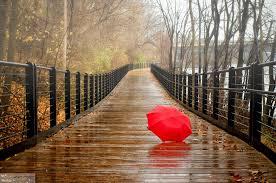 Image result for چتر رنگی