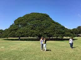 この 木 なん の 木