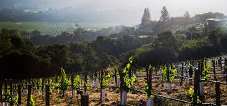 a day in wine country san francisco wine tour in napa sonoma valleys