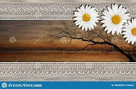 Sunset, River, White Daisies On Wood ...