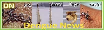 Resultado de imagem para logo de dengue news