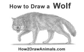 white wolf growling drawing. How To Draw Wolf Snarling For White Growling Drawing