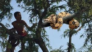 Image result for boy in tree by snake photo