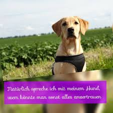 Dogsayings Instagram Photos And Videos