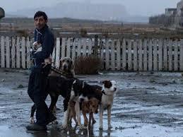 """Cannes 2018 : les chiens du film """"Dogman"""" remportent la Palme Dog"""