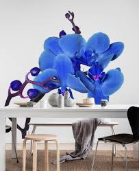 wallpaper blue orchid wall mural flowers blue