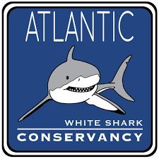 order license plates atlantic white shark conservancy atlantic white shark conservancy