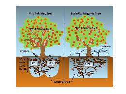 Crop Guide Growing Citrus Trees Haifa Group