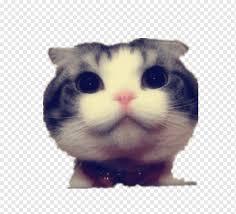 funny cat kitten dog big cat stay meng