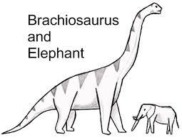 brachiosaurus size the problem with big dinosaurs