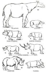 Rhinoceros Wikipedia