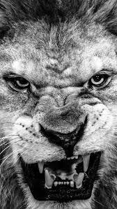 dark fierce wild lion macro