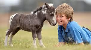 baby mini horse. Unique Horse 15 Miniature Horse Intended Baby Mini S