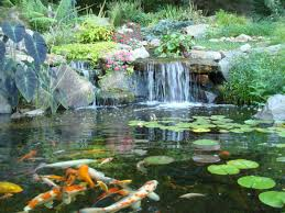 Pond Ecosystem Ponds Turpin Landscaping