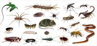 Başarı Böcek İlaçlama