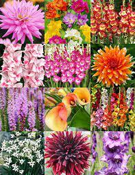 summer cut flower garden holland bulb