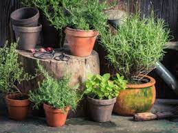 herb growing secrets clever s for
