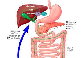 Identifying Diarrhea Caused By Bile Acid Malabsorption