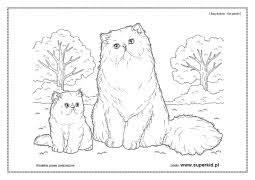 Znajdziesz w niej piękne obrazki do kolorowania oraz aż 74 naklejki z. Kolorowanki Koty Rasy Kotow Superkid