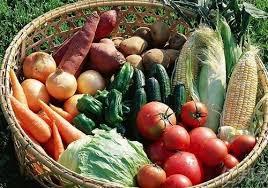 Курсовые овощи защищенного грунта найден Курсовые овощи защищенного грунта