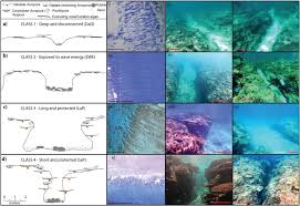 Coral Classification Chart A Morphometric Assessment And Classification Of Coral Reef
