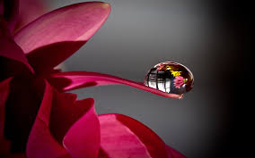 cool hd 3d pictures of water drop. Interesting Pictures Water Drop On Flower Petal On Cool Hd 3d Pictures Of R