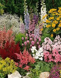 Small Picture Pretentious Design Ideas Perennial Flower Garden Modest New Jersey