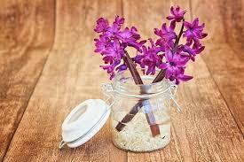 1,000+ Free <b>Flower Vase</b> & <b>Vase</b> Images - Pixabay