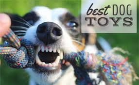 What Are The Best <b>Dog Toys</b> For 2019? | CanineJournal.com