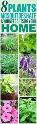 8 Amazing Plants That'll Repel Mosquitoes (And Other Pests!)