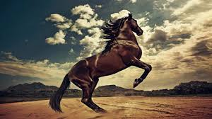 wild horses mustang wallpaper. Wild Horses National Geographic Documentary And Mustang Wallpaper