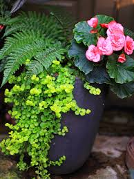 Outdoor Container Planting  WightsContainer Garden Shade Plants