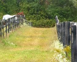Nutsedge Herbicides Best Herbicide For Pastures Photo Weed With Horse Nutsedge