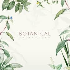 Botanical Vectors Photos And Psd Files Free Download