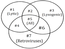 Lytic And Lysogenic Cycle Venn Diagram Preap Gt Biology 4th Six Weeks Preap Gt Biology With