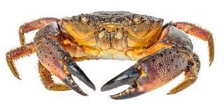 Crab Species Chart 10 Different Types Of Crabs