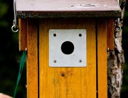 Sparrow Birdhouse Hole Size Chart Best Dimensions For Birdhouse Entrance Holes