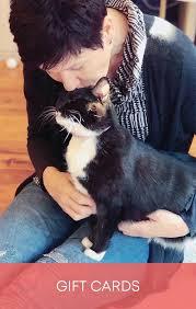 L'adattamento del celebre omonimo musical: Catflix Cat Cinema Catmosphere