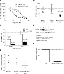Targeted Delivery Of Antisense Oligonucleotides To Pancreatic β