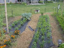 counting the failures and successes of a new vegetable garden