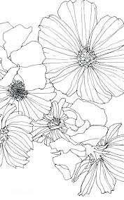 Diagram parts of a daisy flower diagram cosmos and sweet pea