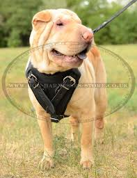 best leather dog harness