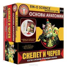<b>Профессор Эйн Набор для</b> опытов Скелет и череп — купить в ...