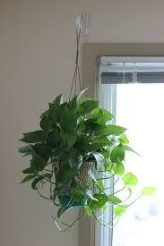 Simple Interior Design with DIY Ceiling Hanging Planters, Jute Rattan  Planters, Jute Rattan Planters