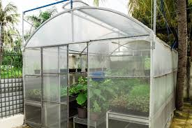 uv resistant greenhouse plastic sheeting. Fine Resistant Greenhouse Plastic Film Clear Polyethylene 6 Mil 4 Year UV Resistant Cover  15 Ft Wide  To Uv Sheeting S